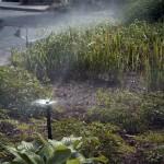 Sprinklers Watering Shrubs